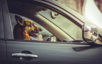 Traveling with Pets This Holiday